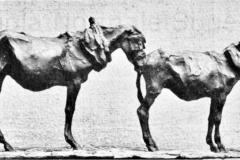 Rembrandt Bugatti. Asino e Cavallo| Bronzo, 33,5 x 21 x 11 cm. Esposto alla I Biennale romana del 1921