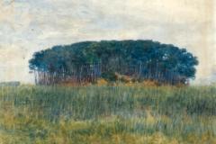 Plinio Nomellini. La Foresta di Tombolo - Tecnica: Olio su Tela, 45 x 54 cm. Firma in basso a destra